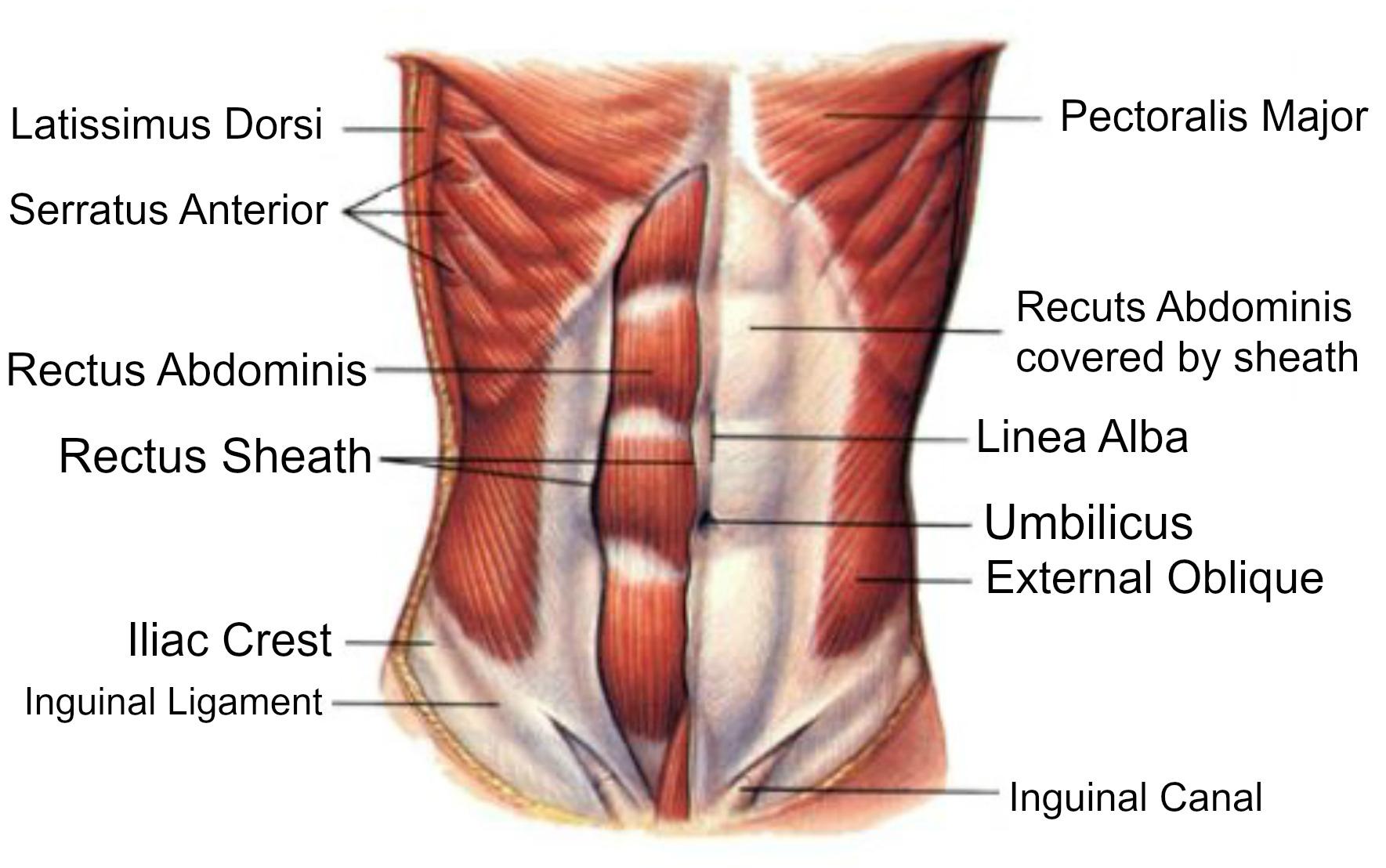 Bauchmuskelzerrung - Abdominale Belastung - Symptome & Behandlung